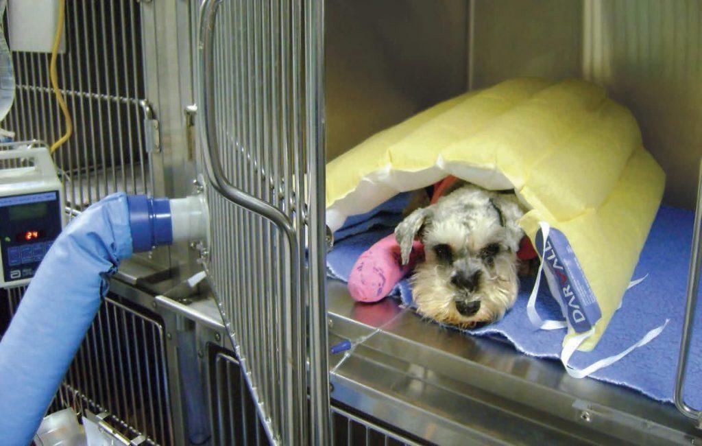 Surgery unit blanket / warming / veterinary